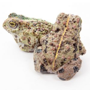 chocolate-natterjack-toad