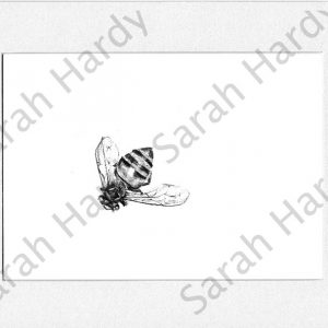pencil-drawing-mimic-wasp