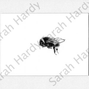 a fine pencil drawing print of a bumble bee in a mount